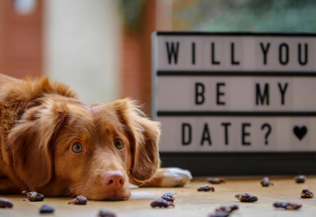 Durch Matchdating kann man seinen neuen Partner kennenlernen